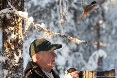 Siberian Jay! (petergranström) Tags: approved siberian jay lavskrika bird fågel wings vingar photographer fotograf camera kamera tree träd twig snow snö liechen lav objective objektiv