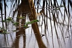 Árboles (-Ana Lía-) Tags: flickr nikon lagoepecuén city ciudad villaepecuén reflejo reflexión agua water nature naturaleza charco carué buenosaires argentina réflexe reflection analialarroude verde color vida abstracto luz cielo sky árbol
