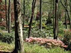Remembering Spring at Gibbs Gardens (randyherring) Tags: gibbsgardens ballground ga cherokeecounty nature beauty