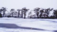 frozen (Bo Dudas) Tags: snowstorm frozen trees treeline arctic silhouette minimalism white fence