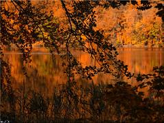 Autumn at the Lake Uklei (Ostseetroll) Tags: deu deutschland geo:lat=5418238070 geo:lon=1063531405 geotagged schleswigholstein sielbeck ukleisee herbst autumn herbstfarben autumncolours spiegelungen reflections lake olympus em10markii