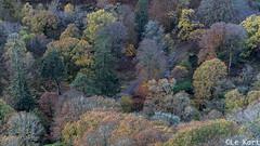 Autumn Road Guiness Lake (Alex Kozyr) Tags: autumn path forest wicklow wicklowmountains guinnesslake sunrise