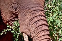 El último (Enrica F) Tags: manyara tanzania áfrica safari nikon wildlife nature