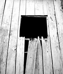 Emptiness (pjpink) Tags: rustic abandoned overgrown blackandwhite bw monochrome uncolored colorless littlewashington washington virginia july 2019 summer pjpink 2catswithcameras