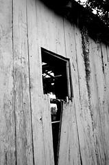 Shed Symbol (pjpink) Tags: rustic abandoned overgrown blackandwhite bw monochrome uncolored colorless littlewashington washington virginia july 2019 summer pjpink 2catswithcameras