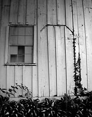 Shed Features (pjpink) Tags: rustic abandoned overgrown blackandwhite bw monochrome uncolored colorless littlewashington washington virginia july 2019 summer pjpink 2catswithcameras