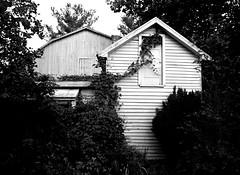 Overwhelmed (pjpink) Tags: rustic abandoned overgrown blackandwhite bw monochrome uncolored colorless littlewashington washington virginia july 2019 summer pjpink 2catswithcameras