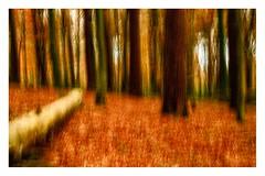 Autumn (1 of 1)-3 (ianmiddleton1) Tags: icm fall autumn autumnal woodland