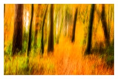 Autumn (1 of 1)-2 (ianmiddleton1) Tags: icm fall autumn autumnal woodland