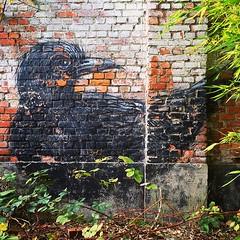 #Ghent update / always great when an old #ROA reappears . #Gent #streetart #graffiti #urbanart #graffitiart #streetartbelgium #graffitibelgium #visitgent #muralart #streetartlovers #graffitiart_daily #streetarteverywhere #ilovestreetart #igersstreetart #g (Ferdinand 'Ferre' Feys) Tags: instagram gent ghent gand belgium belgique belgië streetart artdelarue graffitiart graffiti graff urbanart urbanarte arteurbano ferdinandfeys roa