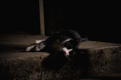 DSC08105 (Rex_Chen) Tags: 2019 cat sony a73 fe2870mm taiwan taipei