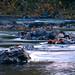 Rivanna River in Charlottesville on Autumn Morning