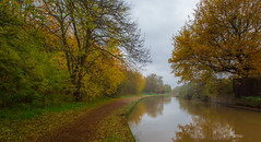 Catching the last of the Autumn colours. (Ian Emerson (Thanks for all the comments and faves) Tags: nottinghamcanal autumnal autumncolour canon6d canal nottingham canon trees november colourful towpath