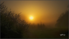 The Wandering Star. (Picture post.) Tags: landscape nature green sunrise mist trees paysage arbre brume