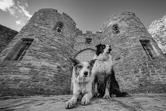 Guard Dogs (FireDevilPhoto) Tags: dogs beeston castle mono blackandwhite bw architecture pet animal mammal bordercollie merle blue red sony a9 laowa ultrawideangle ir sky