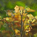 Cat's backlit autumn