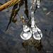 Ice Sculpture - Sculpture de glace