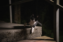 DSC08106 (Rex_Chen) Tags: 2019 cat sony a73 fe2870mm taiwan taipei