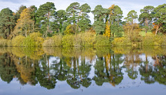 Last of Autumn (sineid2009) Tags: autumn fall lake roundwood water reflections trees wicklow ireland