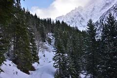 DSC_0071 (Bergwandern Alpen) Tags: alpen alps bergwandern hiking schnee schneelandschaft bergwald nadelwald raminerwald weralpgrat mountainforest