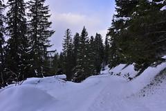 DSC_0165 (Bergwandern Alpen) Tags: alpen alps bergwandern hiking schnee schneelandschaft winterlandschaft nadelwald tannen snow winterlandscape
