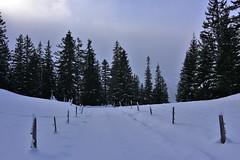DSC_0192 (Bergwandern Alpen) Tags: alpen alps bergwandern hiking winter winterlandschaft schnee zaun tannen bergwald nadelwald snow winterlandscape firs fence weidezaun zugeschneit