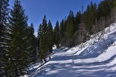 DSC_0226 (Bergwandern Alpen) Tags: alpen alps bergwandern hiking gamperdunerwald winterlandschaft schnee winter schneelandschaft bergwald nadelwald mountainforest firs