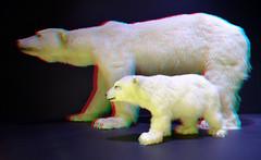 Naturalis Leiden 2019 3D (wim hoppenbrouwers) Tags: naturalis leiden 2019 3d anaglyph stereo redcyan ijsberen ijsbeer polarbear