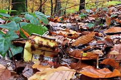 139 Kcal 7% (Un jour en France) Tags: canoneos6dmarkii canonef1635mmf28liiusm eos forêt feuille champignon automne hautsdefrance oise picardie
