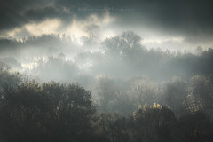 Les ténèbres d'automne (Bertrand Thiéfaine) Tags: automne brume matin loire leverdujour îleneuvemacrière maineetloire champtoceaux ténèbres lumière ambiance mystique