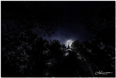 SEPTEMBER 2019  _31NGM_3030-2-222 (Nick and Karen Munroe) Tags: moon moonshot light moonrise moonlit moonshine sky fullmoon moonshots lunar luna clouds cloudy cloudcover nighttime nightsky nightphotography darksky dark night nightfall evening sunset sunsetting dusk waning twighlight karenick23 karenick karenandnickmunroe karenandnick munroe karenmunroe karen nickandkaren nickandkarenmunroe nick nickmunroe munroenick munroedesigns photography munroephotoghrpahy munroedesignsphotography nature landscape brampton bramptonontario ontario ontariocanada outdoors canada d750 nikond750 nikon nikon70200f28 nikon70200 f28 nikonf28 70200 70200f28 colour colours color colors