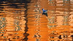 regard sur le rohan (eric-foto) Tags: landerneau reflets abstrait abstract eau water rivière bretagne breizh brittany bzh finistère pennarbed nikond800 élorn