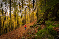 Orange trail (Artur Tomaz Photography) Tags: gouveia leafs serra da estrela yellow autumn colors faias forest manteigas orange outono trees wood pessoas people