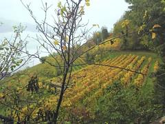 Autunno in Alto Adige   - Italia (amos.locati) Tags: amos locati autunno alto adige italia autumn south tyrol italy vigne collina