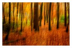 Pollok Park (1 of 1)-2 (ianmiddleton1) Tags: autumn fall colours colors woodland trees icm movement composite