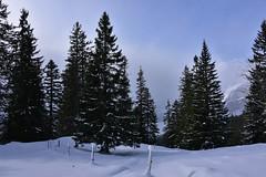 DSC_0204 (Bergwandern Alpen) Tags: alpen alps bergwandern hiking winter winterlandschaft schnee schneelandschaft zaun bergwald nadelwald snow winterlandscape fence mountainforest firs weidezaun