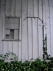 Shed View (pjpink) Tags: littlewashington washington virginia july 2019 summer pjpink 2catswithcameras abandoned overgrown
