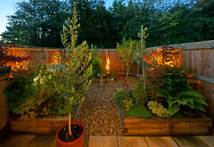 My little garden, autumn time. (Minoltakid) Tags: garden lights little mylittlegarden olivetree olivetrees olive trees tree raisedboarders raised boarders plants evergreen ferns fern acer acers hibiscus theminoltakid minoltakid rossdevans rossevans ross illuminated october 2019