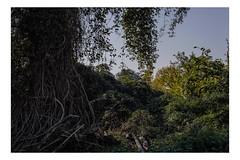 Modena, 2019 (Exit Imago) Tags: emiliaromagna italia italy modena overgrown railway track train