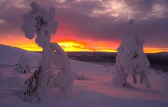 Levi-8742 (ikkasj) Tags: lappi lapland finland colorful picturesque kittilä snow sunset winter
