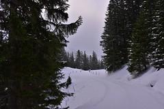 DSC_0171 (Bergwandern Alpen) Tags: alpen alps bergwandern hiking schnee schneelandschaft winter winterlandschaft bergwald nadelwald zaun snow winterlandscape mountainforest