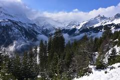 DSC_0290 (Bergwandern Alpen) Tags: alpen alps bergwandern hiking bergpanorama bergwald berglandschaft mountainforest mountainlandscape wolken wolkenspiel clouds nebel nebelschwaden fog schnee snow sernftal hochalpin