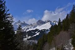 DSC_0307 (Bergwandern Alpen) Tags: alpen alps bergwandern hiking grosschärpf blistock bergwald mountainforest berglandschaft mountainlandscape winter snow schnee bergpanorama gamperdunerwald