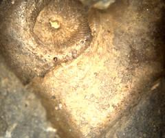 1438963781.710152 (1) (jgdav) Tags: ancient rock image light ochre pigment gold micro pictograph petroglyph quartz america