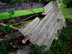 Discarded (pjpink) Tags: littlewashington washington virginia july 2019 summer pjpink 2catswithcameras abandoned overgrown