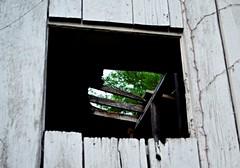 Framed (pjpink) Tags: littlewashington washington virginia july 2019 summer pjpink 2catswithcameras abandoned overgrown