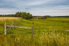 Green Pasture (Bracus Triticum) Tags: green pasture アルバータ州 alberta canada カナダ 8月 八月 葉月 hachigatsu hazuki leafmonth 2019 reiwa summer august