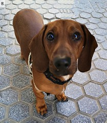 Whisky Dog. (In Dulce Jubilo) Tags: fotografía photography andalucia andalusia animal animals pet perro dog cachorro mascota lindo nice espagne españa spanien spain