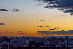 Nubes al atardecer 109 (dorieo21) Tags: birds pájaros oisseaus atardecer crépuscule sunset exquisitesunsets sky skyscape nube nuage nubes nuvola nuages cielo ciel tramonto crepúsculo ocaso nikon d7200 cloud clouds himmel sonnenuntergang wolke wolken vogel