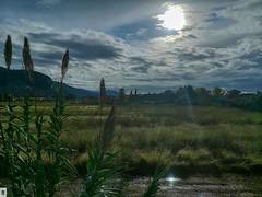 Paisaje de la Toscana: De Pisa a Lucca. (In Dulce Jubilo) Tags: travel toscana tuscany paisaje landscape bello nubes clouds italia italy viaje viajero arboles trees fotografía photography panorámica panoramic lluvia rain
